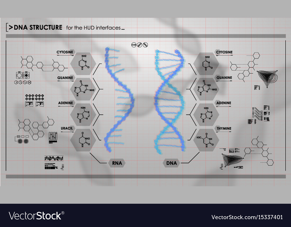 Hud infographic elements with dna structure