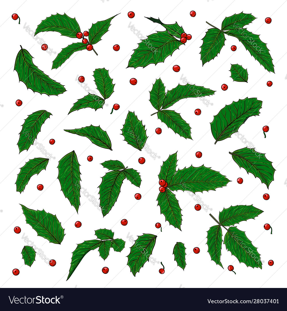 Set holly ilex branch with berry and leaves on