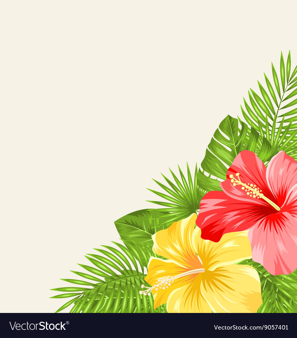 Vintage Background With Colorful Hibiscus Flowers Vector Image