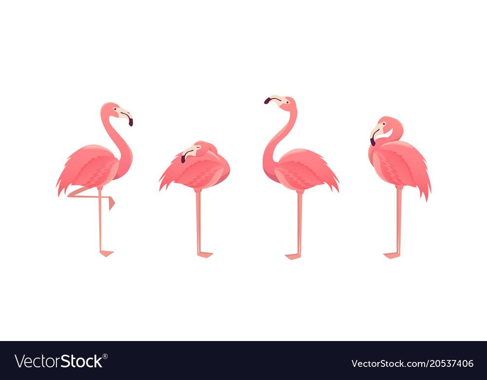 Set of flamingos isolated on white background