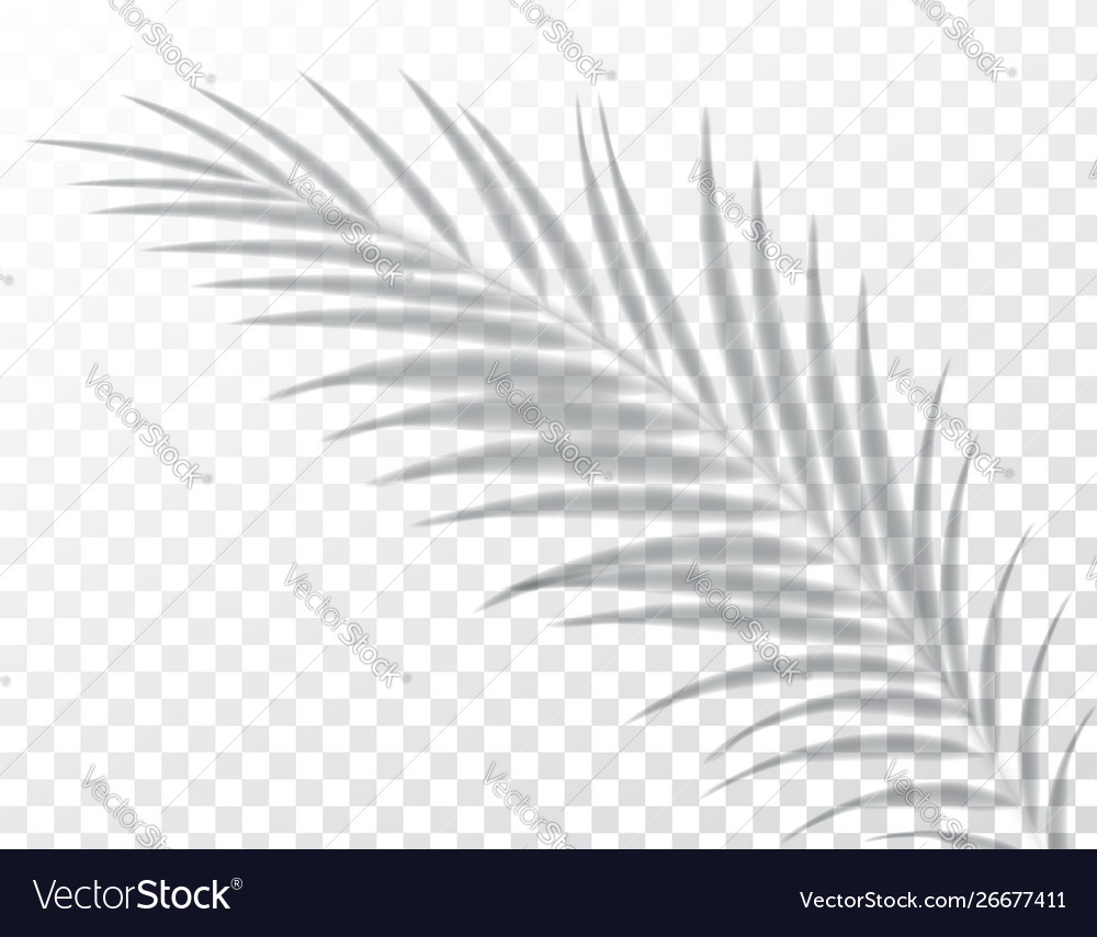 Shadows Overlay Effects Mock Up Leaf Palm Vector Image Find the best free stock images about tropical leaves. vectorstock