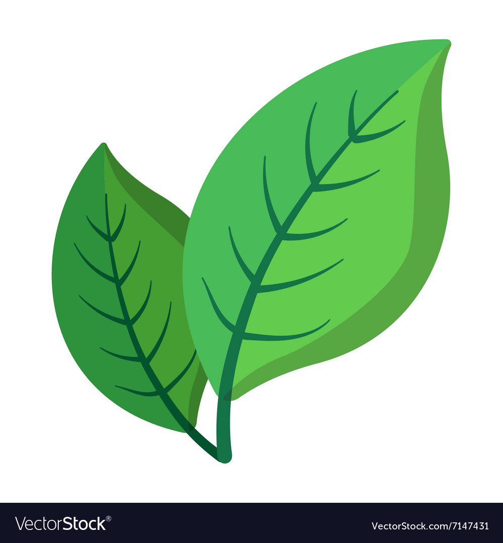 Two green leaves cartoon icon vector image