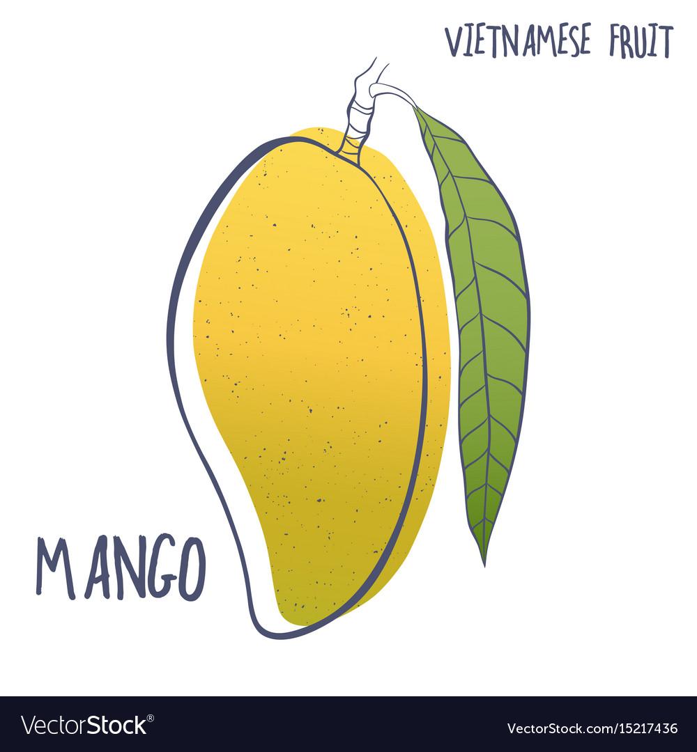 Hand drawn mango fruit icon vector image