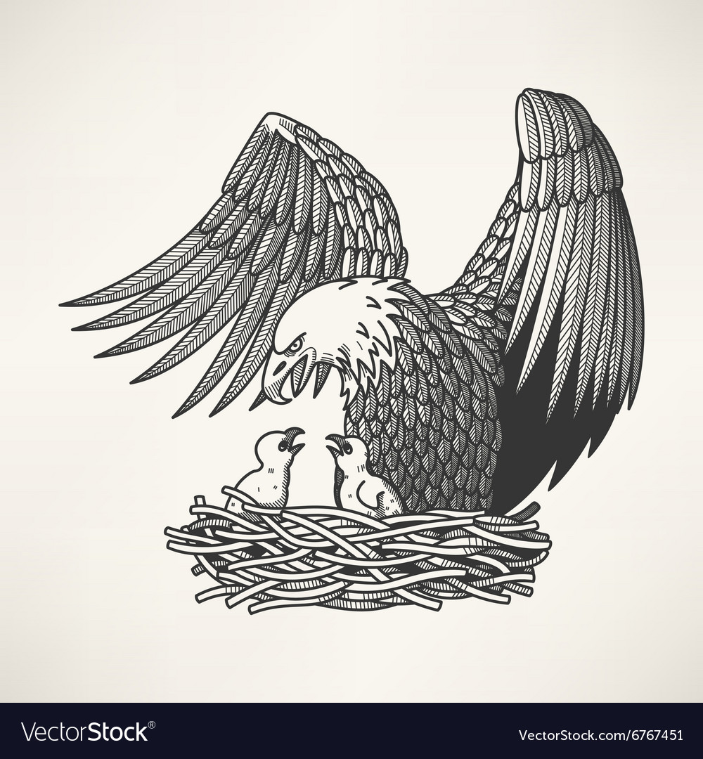 Bald eagle in the nest vector image