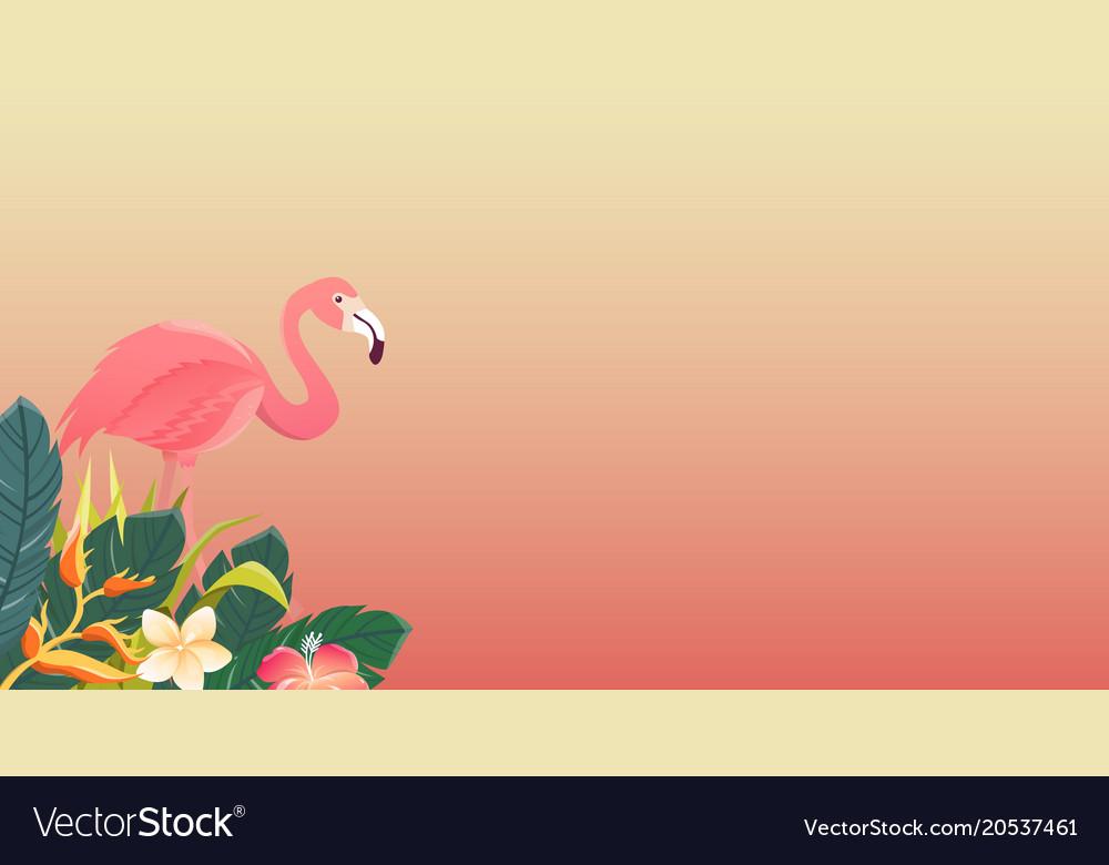Flamingo bird design on white background vector image