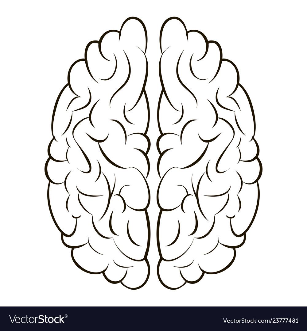 Brain sign icon gyrus right and left brain