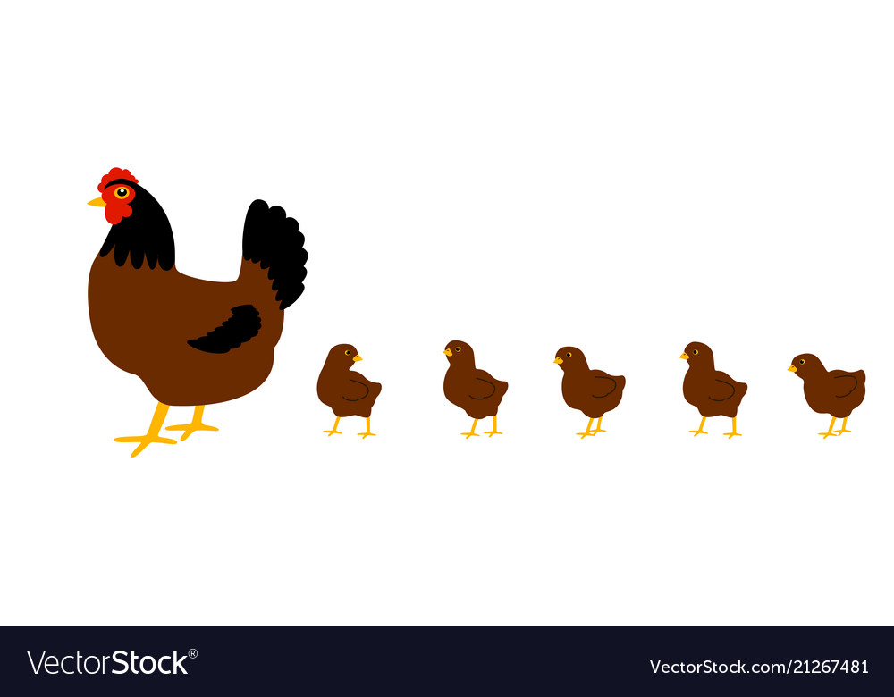 Hen with chickens white background isolated