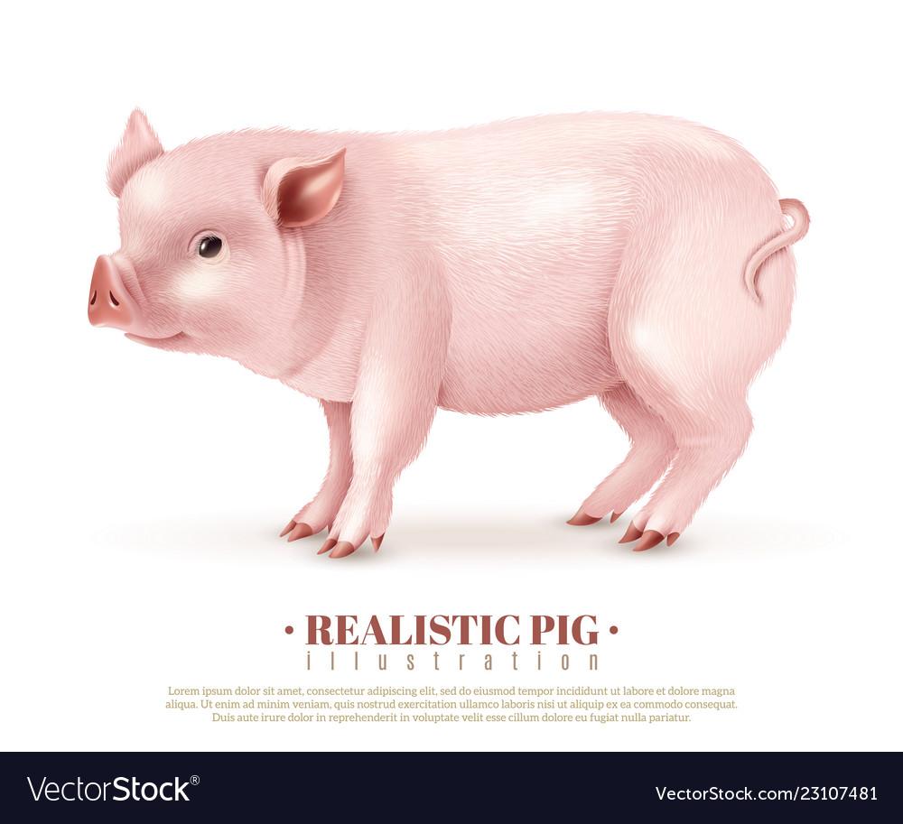 Realistic pig