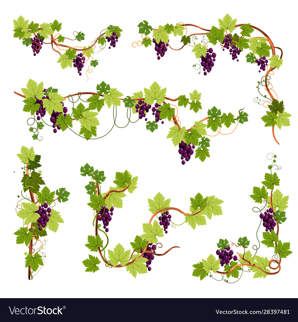 Vine Decor Grapes Bunches On Branches Or Twigs