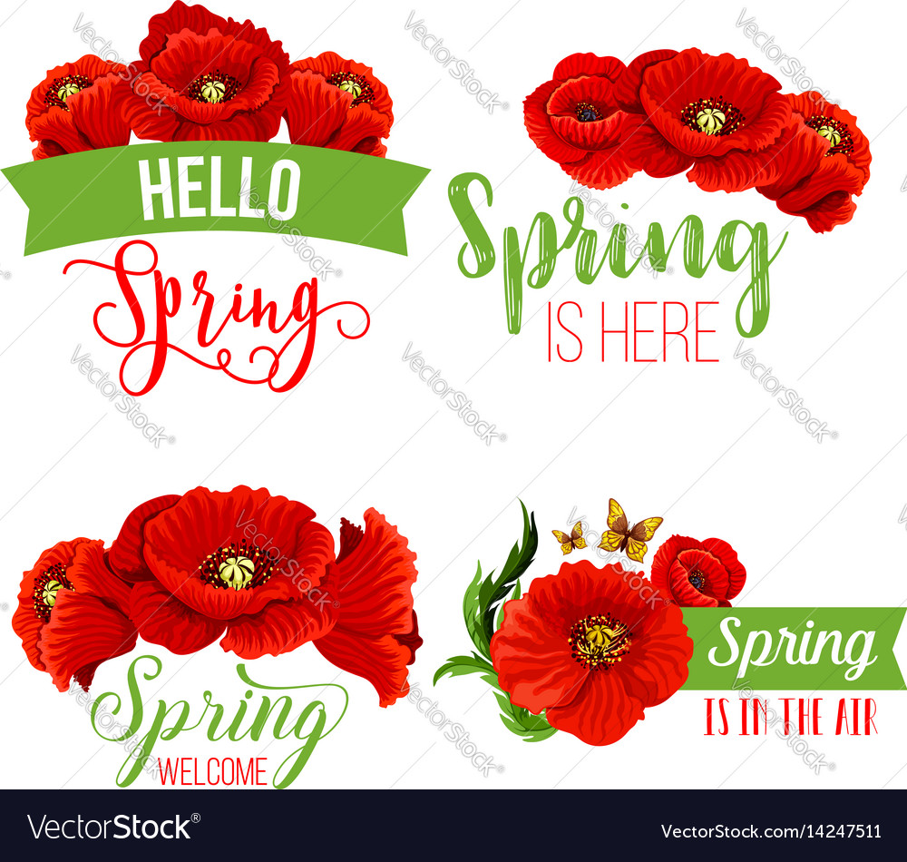 Spring Time Greeting Quotes Poppy Flowers Vector Image
