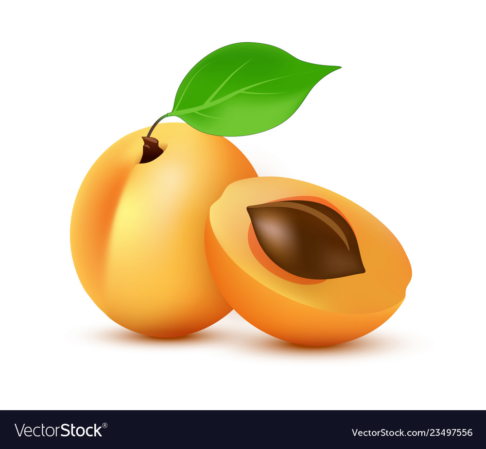 Apricot icon in realistic style - icon