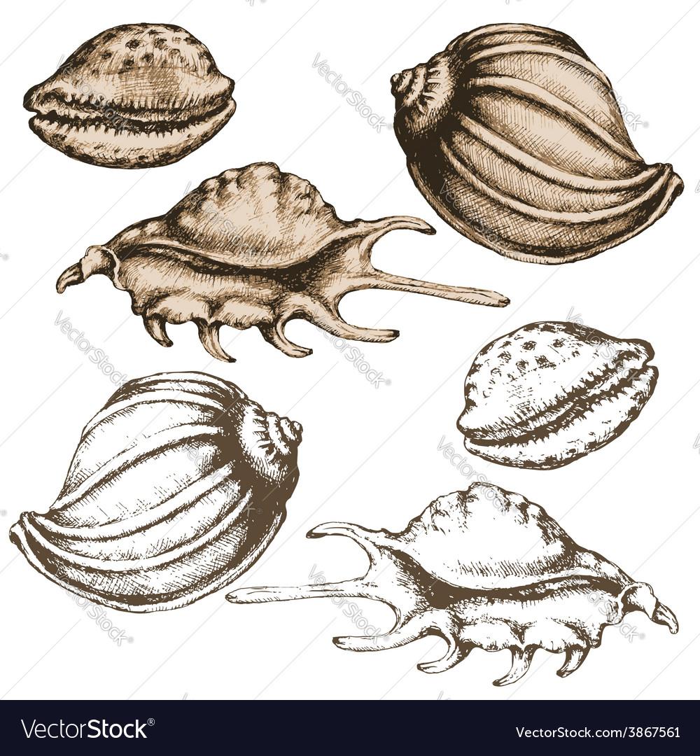 Shell sketch