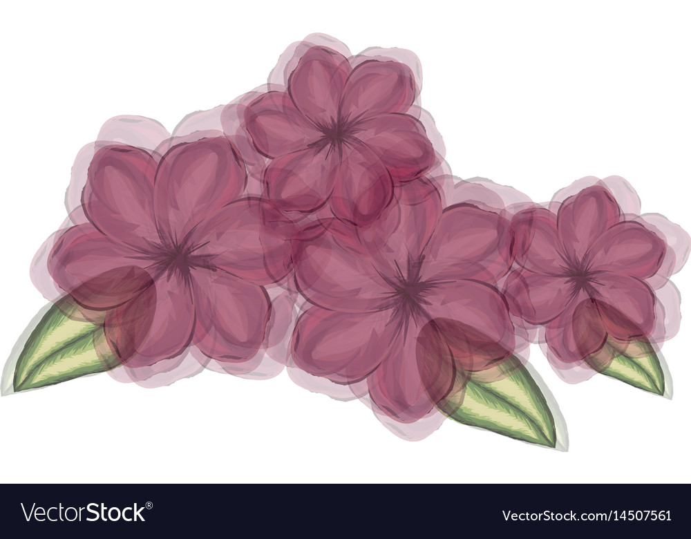 Watercolor silhouette of malva plant with flowers vector image