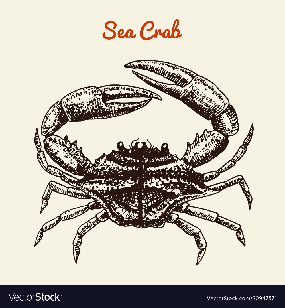 Crustacean crab with claws river and lake or sea vector