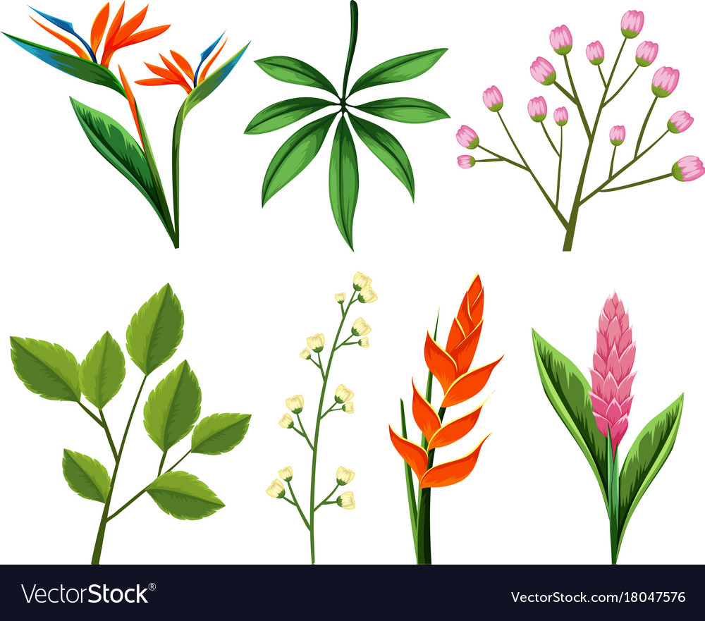 Different types of flowers and leaves vector image
