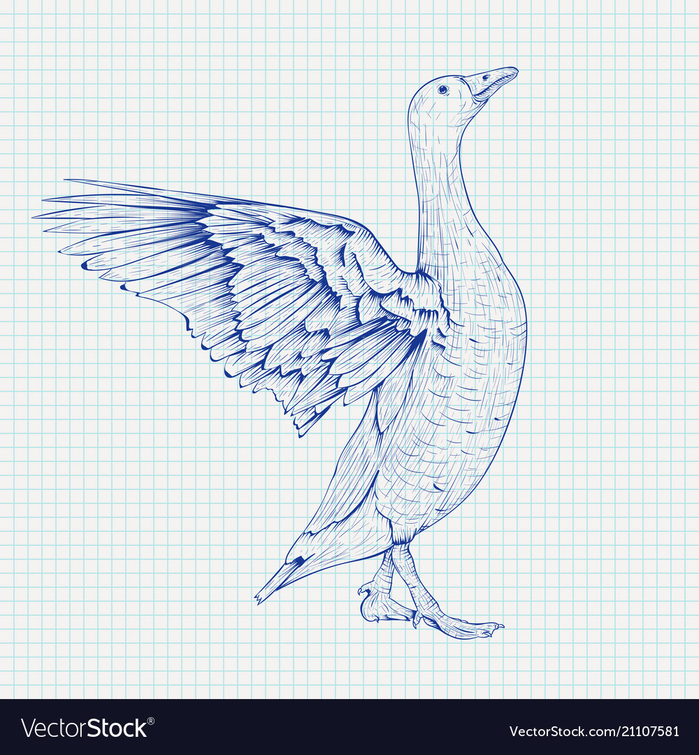 Goose sketch angry bird with lifted wings on vector image