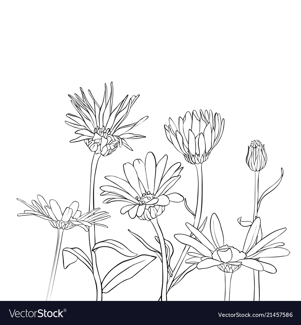 Drawing Daisy Flowers Royalty Free Vector Image