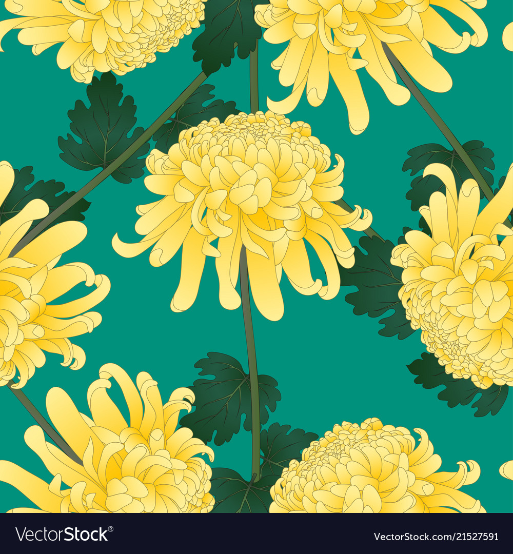 Yellow chrysanthemum flower on green teal vector image mightylinksfo