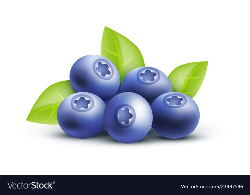 Blueberry icon isolated on