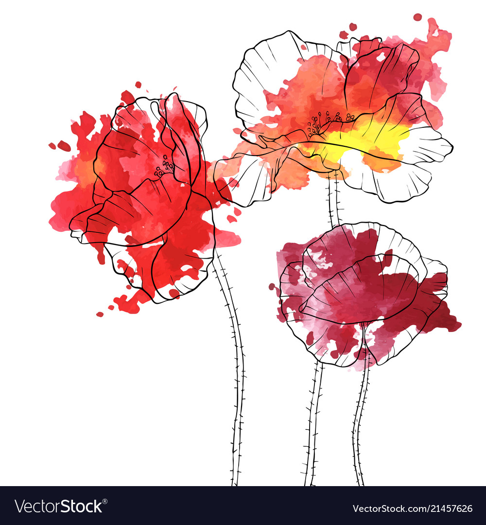 Drawing Poppy Flowers Royalty Free Vector Image