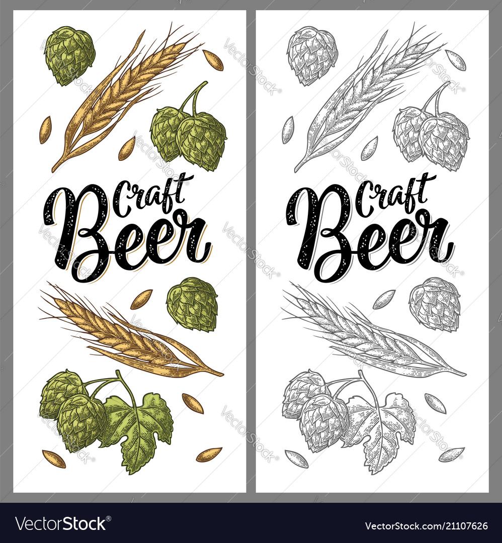 Ears of barley leaves and cones of hops engraving