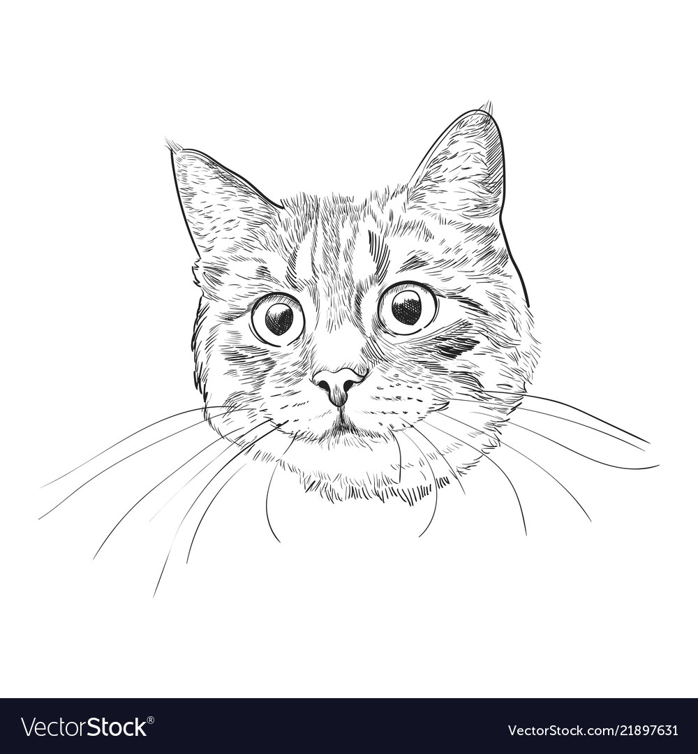 Cute kitty head hand drawn sketch