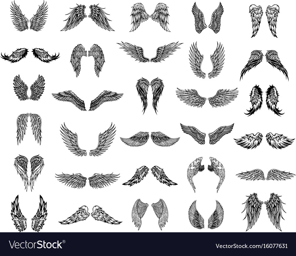 Thirty pairs of wings graphic vector image