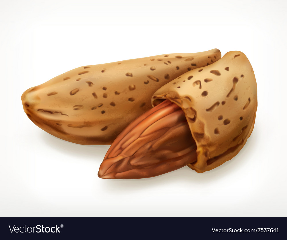 Almonds in shell icon