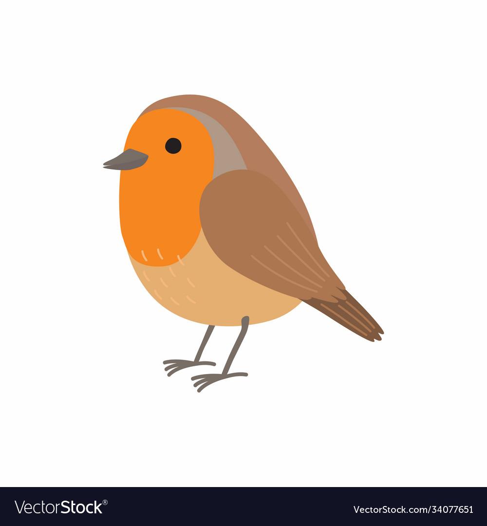 Robin bird isolated on white