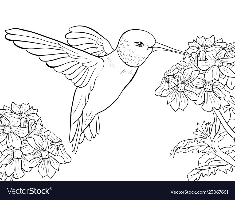 Adult coloring bookpage a cute humming bird and