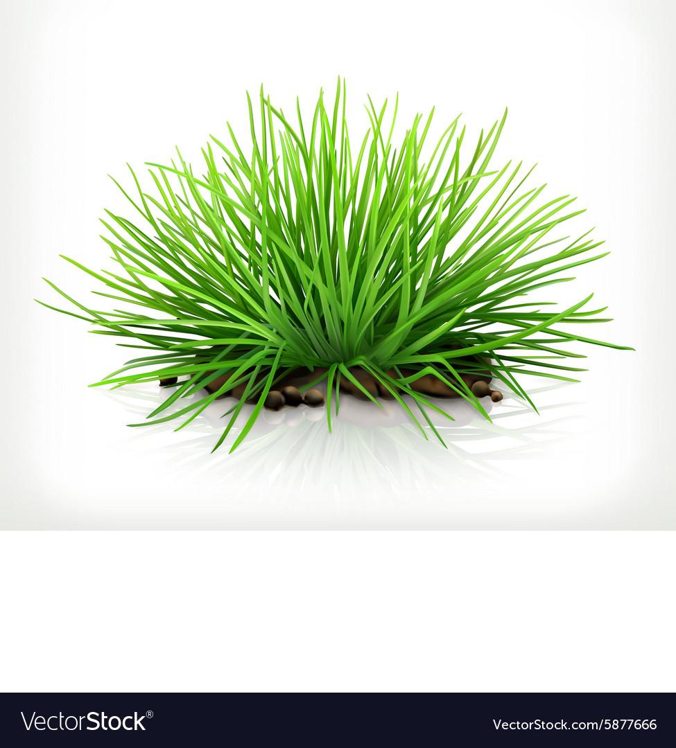 Fresh grass icon vector image
