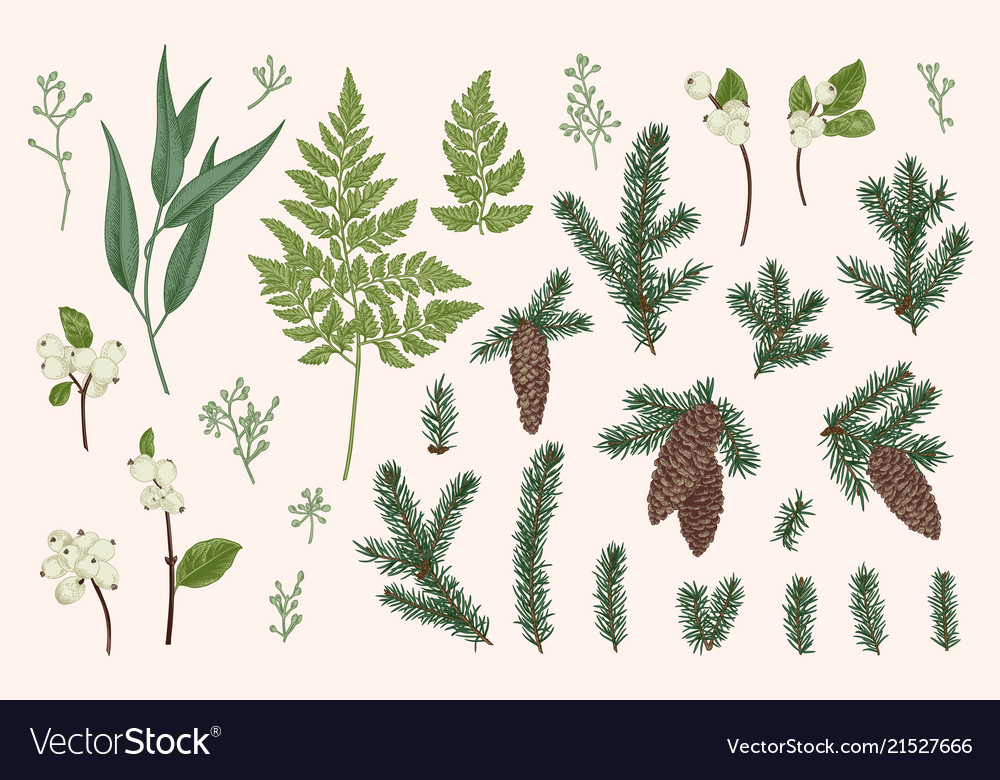 Set with winter plants