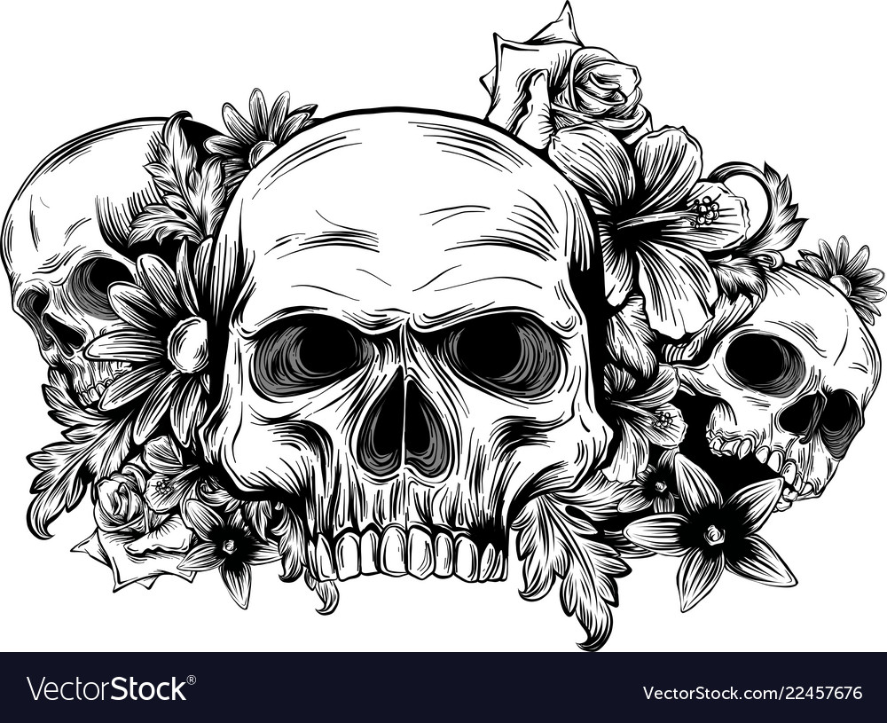 A Human Skulls With Roses On White Background Vector Image