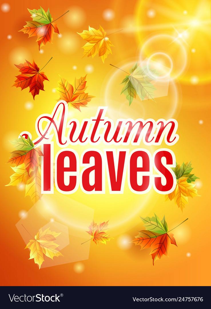 Autumn maple leaves effect sun glow