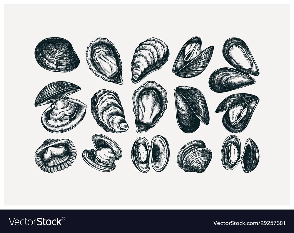Hand drawn edible marine mollusks drawings set
