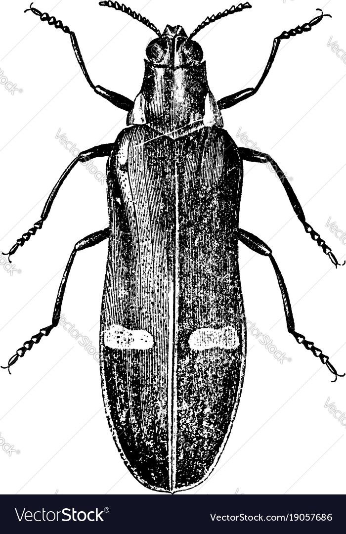 Metallic beetle vintage