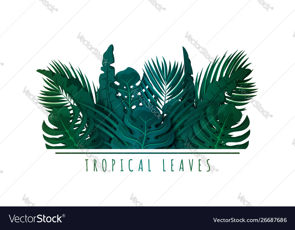 Tropical palm leaves exotic leaves and plants