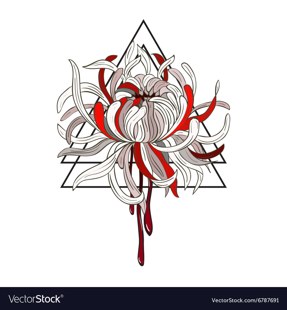 Bloody Chrysanthemum vector image
