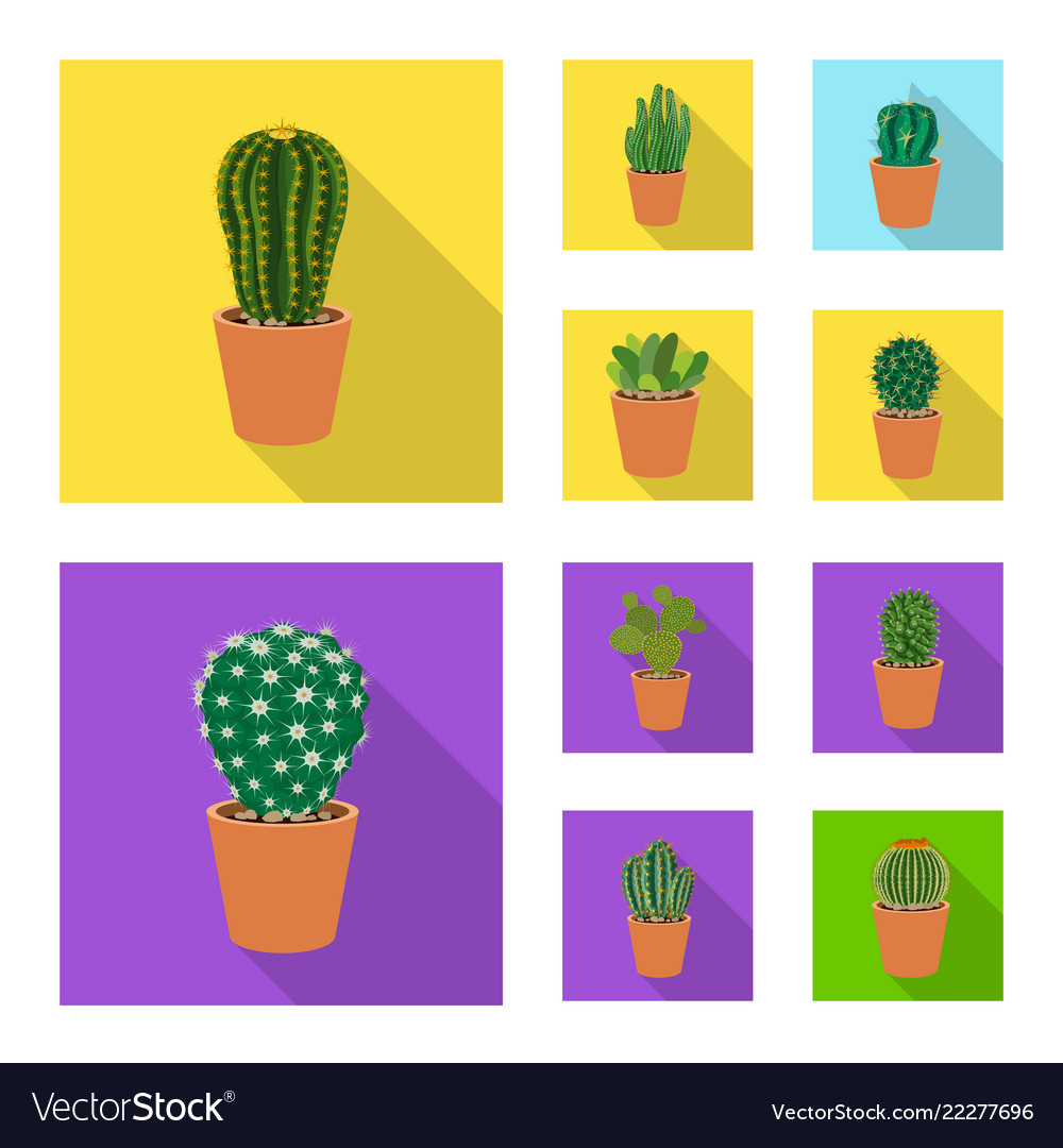 Isolated object of cactus and pot symbol set of