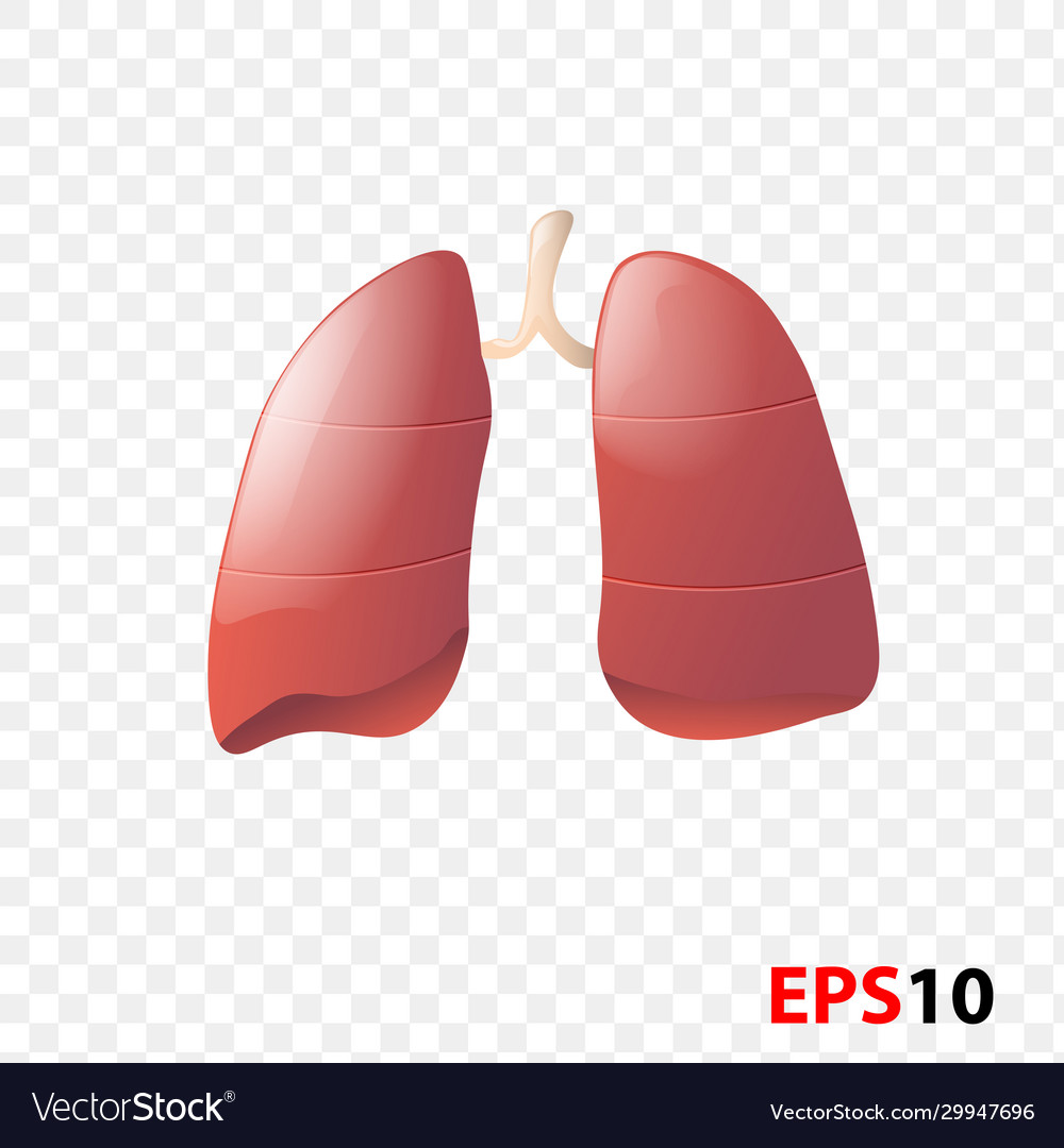 Lungs human internal organ realistic isolated