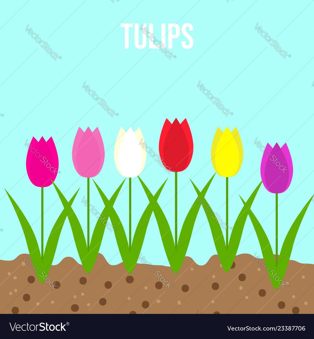 Tulips set of spring garden flowers