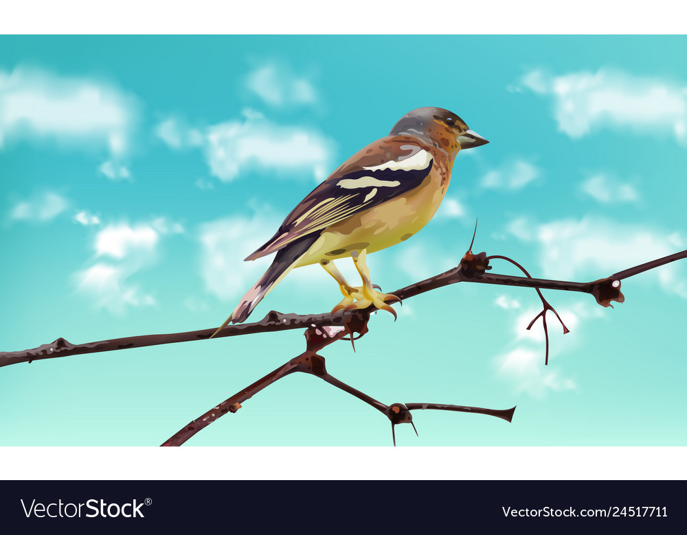 Beautiful sparrow on a branch spring card