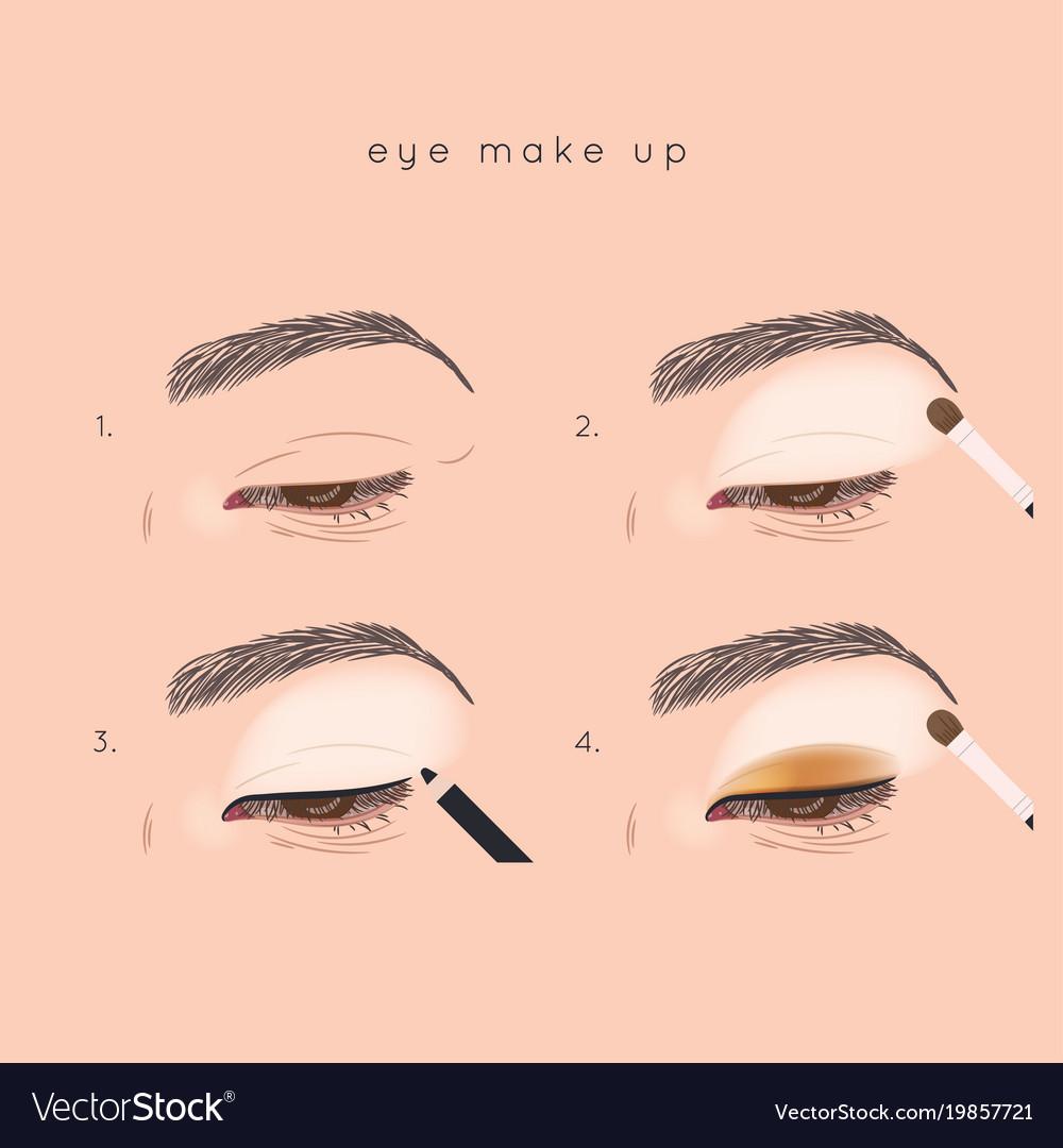 eye make up tutorial how to apply eyeshadow vector image