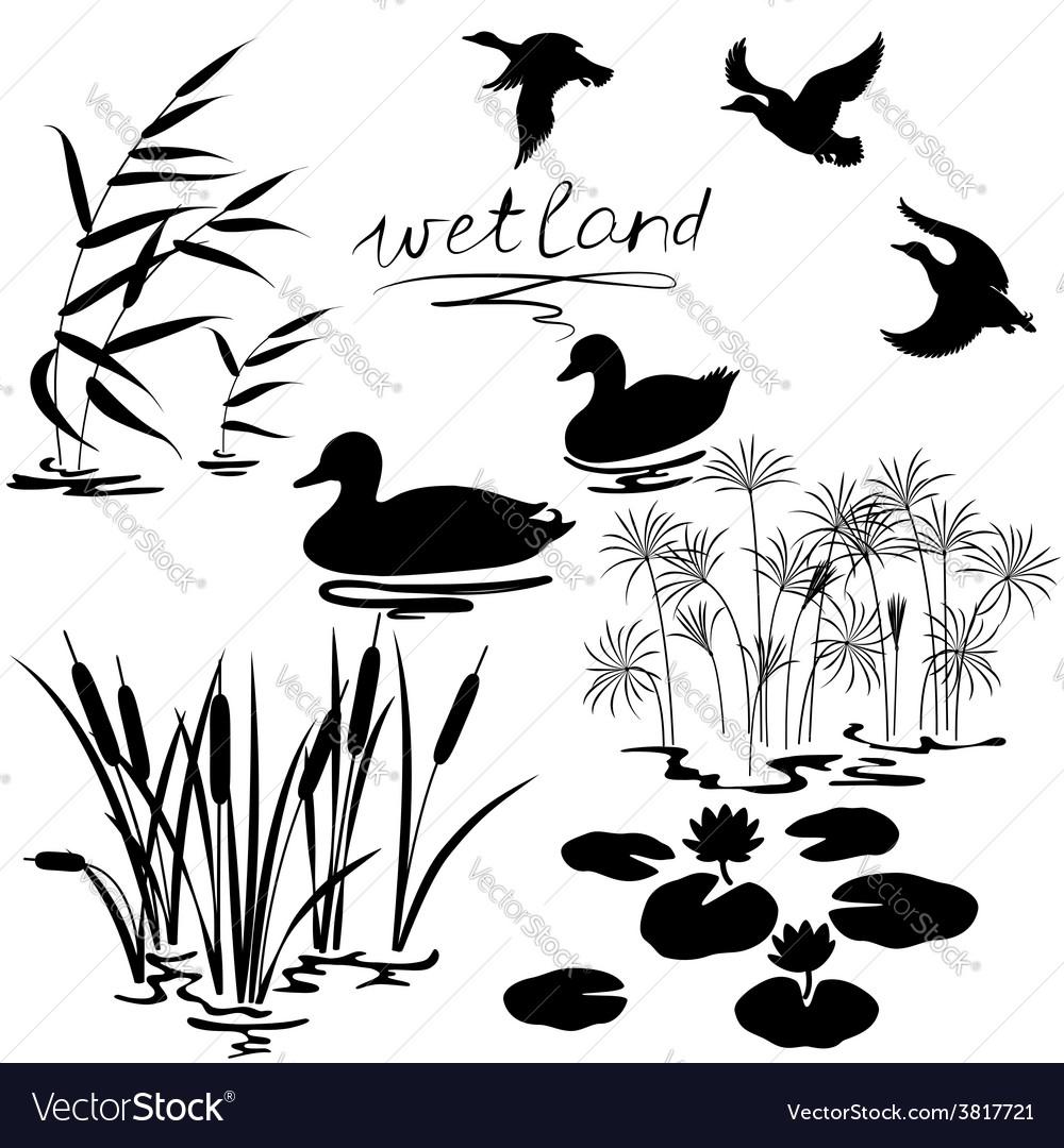 Wetland set