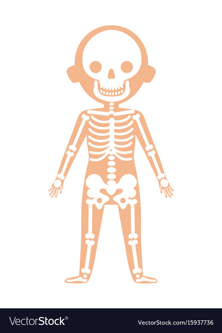 Boy body anatomy with skeleton system Royalty Free Vector