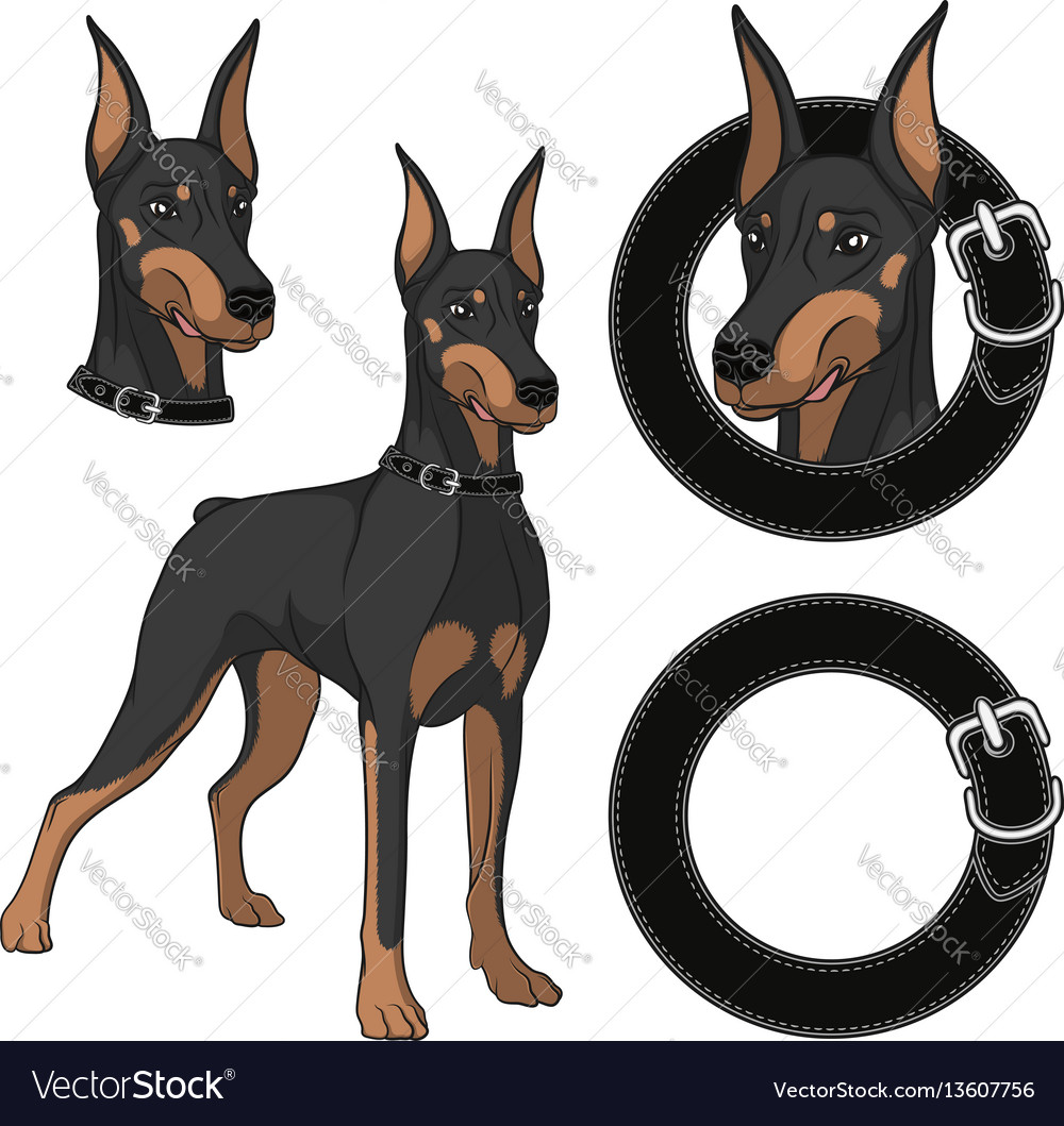 Set of doberman colored in a collar vector image