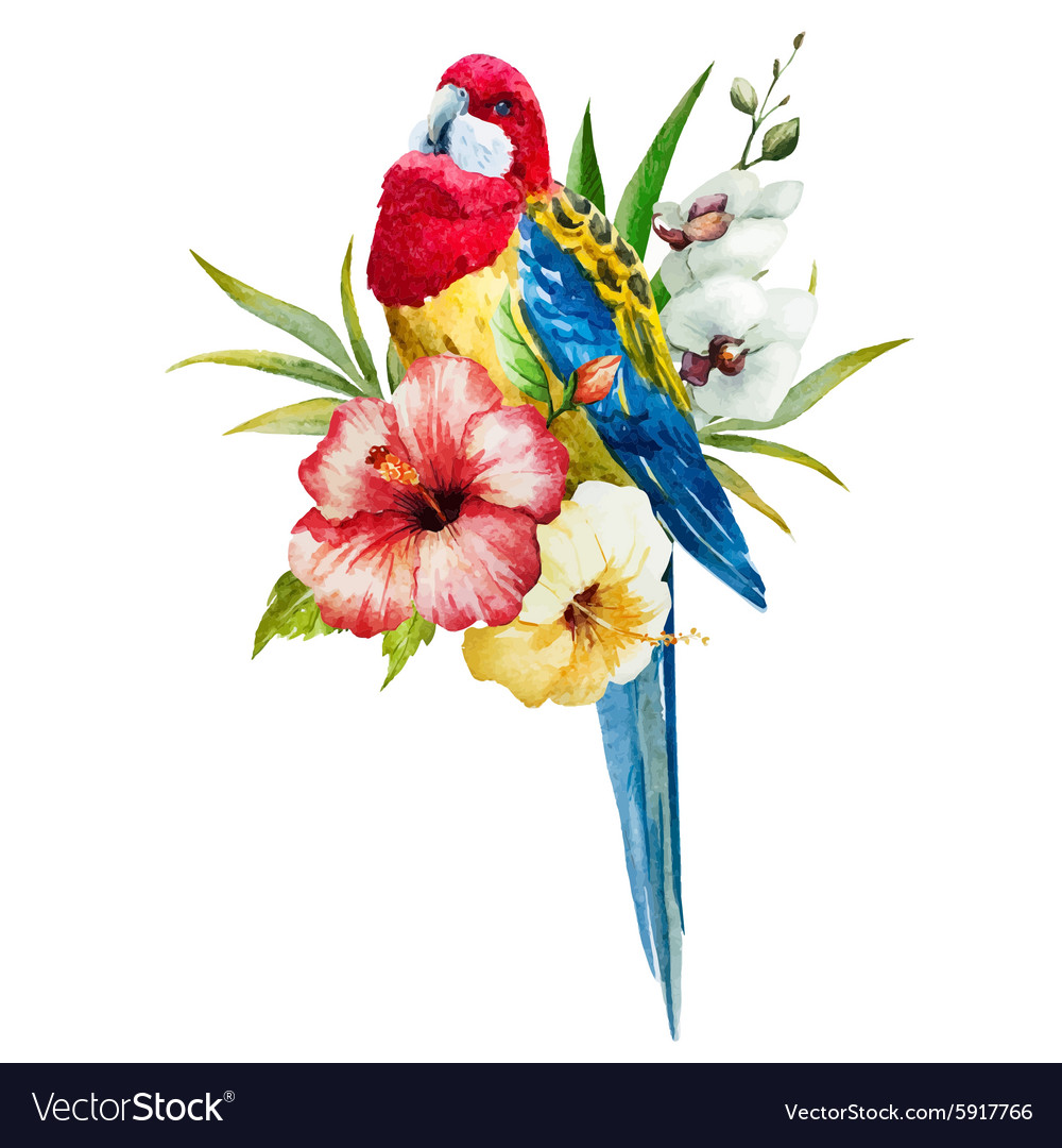 Watercolor rosella bird