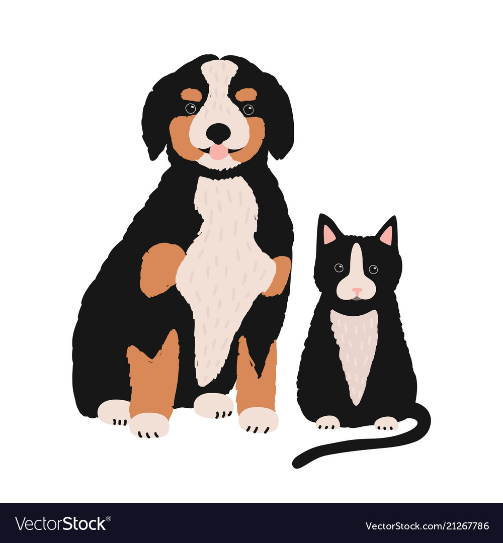 Dog and cat isolated on white background cute