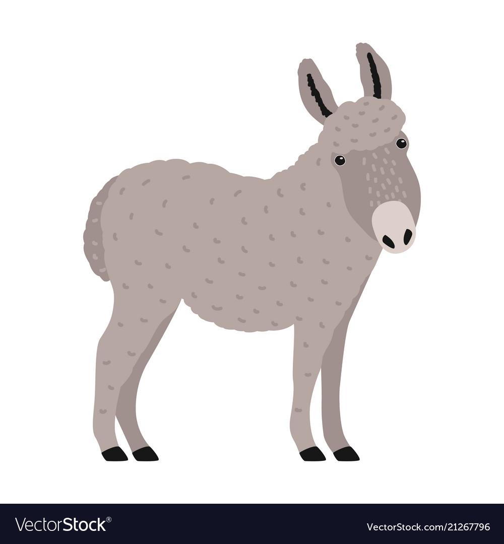 Amusing grey donkey ass or burro isolated on