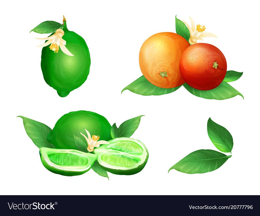 Lime and orange citrus fruits